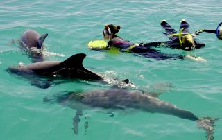 Swim with wild dolphins in Western Australia